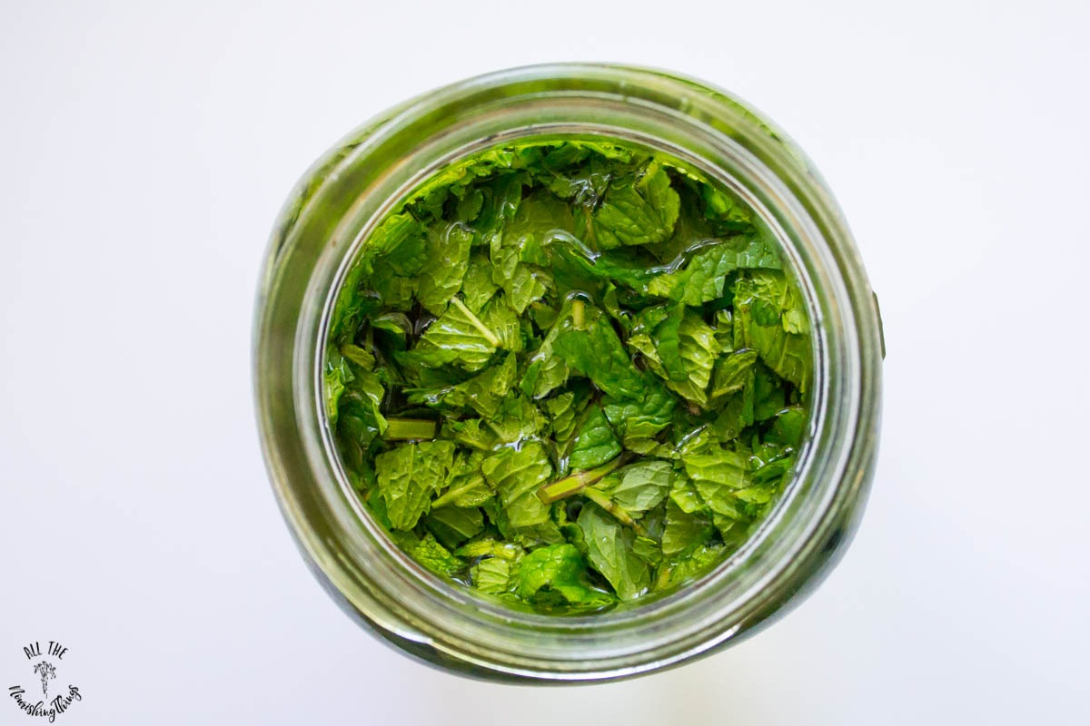 jar of chopped fresh peppermint filled with water