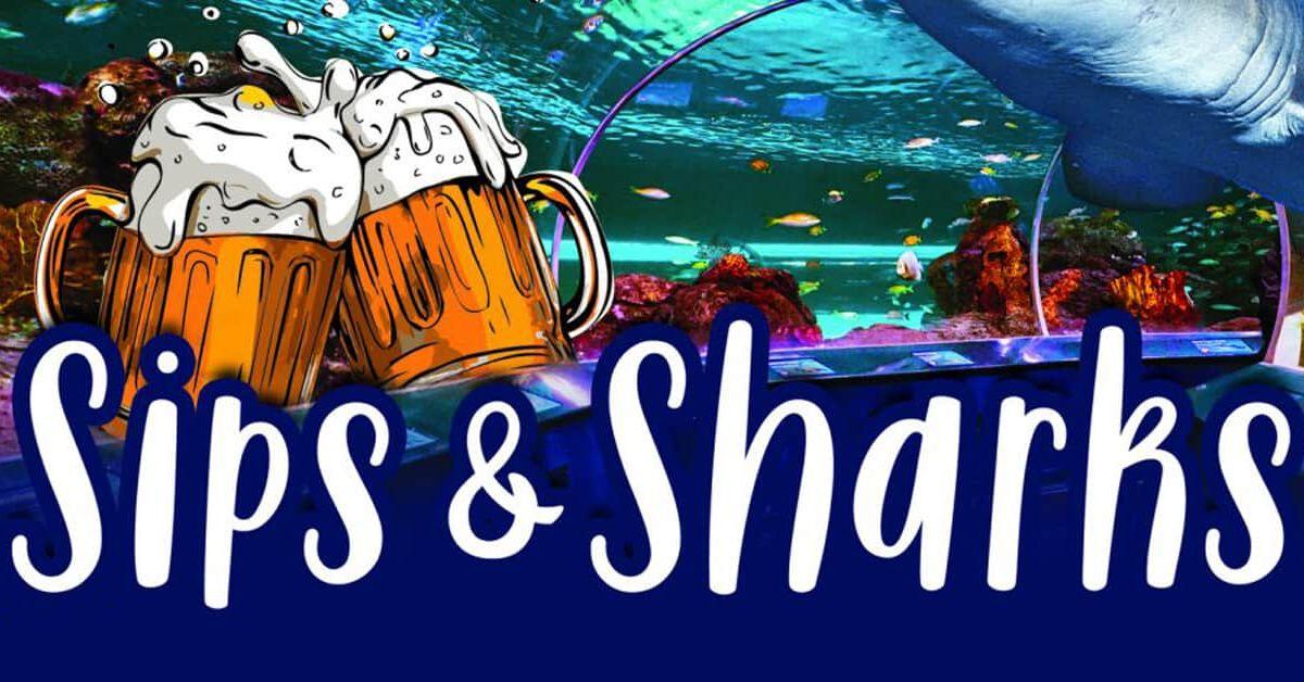 Sips & Sharks