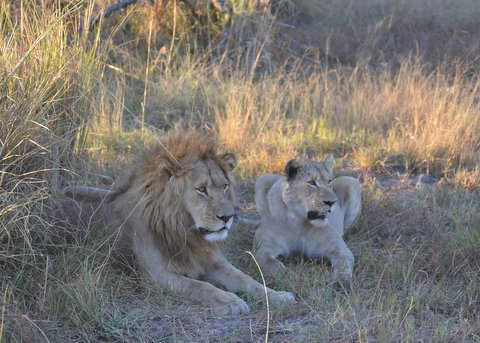 A Few Words About Cecil the Lion, Zimbabwe