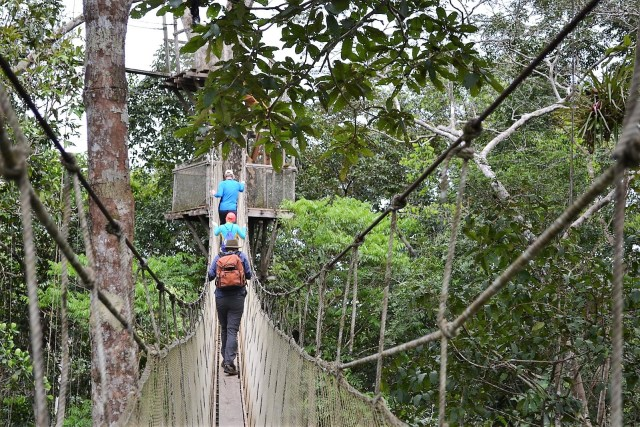 The backs of three people walking over a rope bridge at treetop height