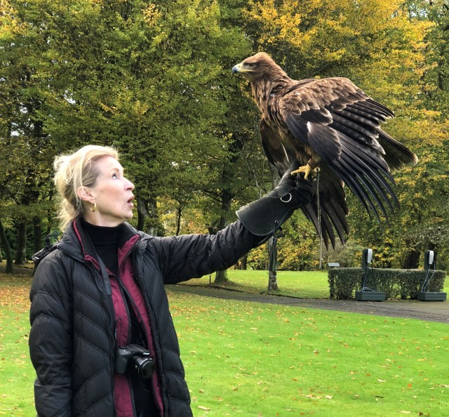 A woman (me) from the waist up, wearing a black puffy coat, stands on a green lawn with trees in the background, she is holding her heavily gloved left hand away from her, and a large raptor has just landed in her hand, her eyes and mouth are open in surprise