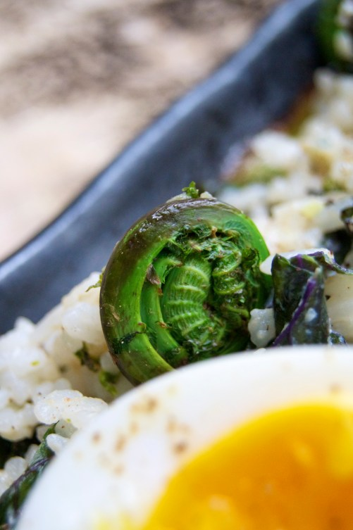 Carolina Gold Rice with Fiddleheads, Kale, and Anchovies with an Egg