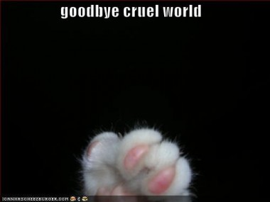 funny-picture-goodbye-cruel-world