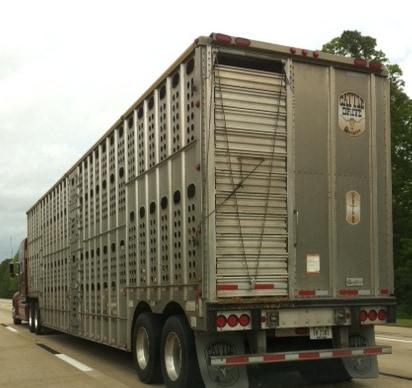 pig-truck