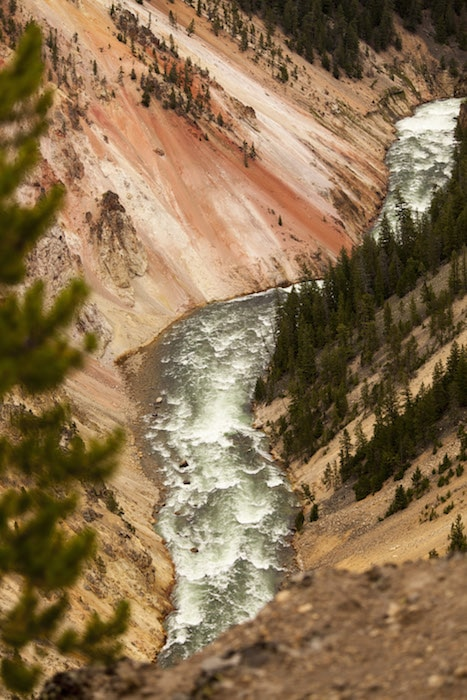 The Yellowstone River rushes between the rose-hued walls of the Grand Canyon of the Yellowstone.