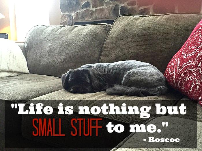 Roscoe doesn't sweat the small stuff