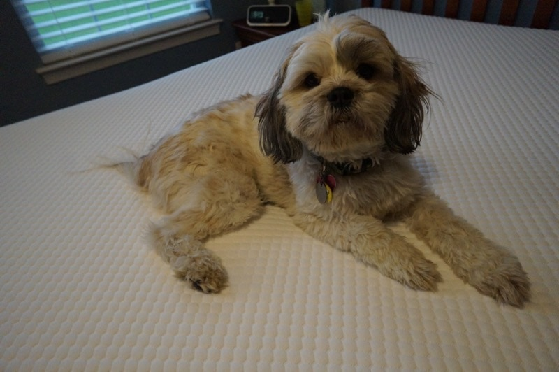 Layla likes the GhostBed mattress