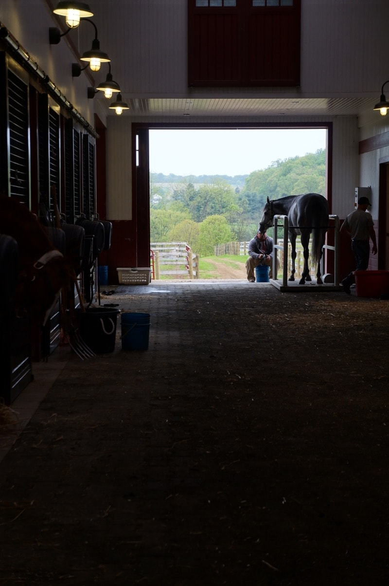 A horse on a vibrator plate at Sagamore Racing