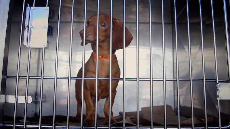 aspca-second-chance-dogs-dogs-from-hoarding-case
