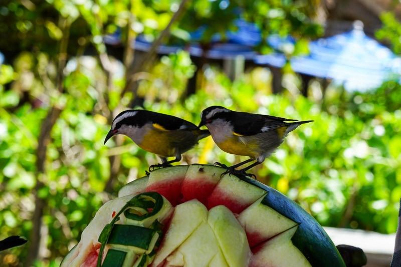 Birds at Castaway Cay