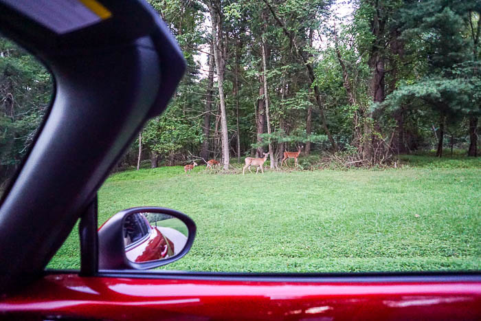 Deer from the Mazda Miata MX-5 RF