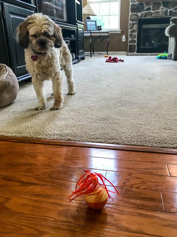 Layla exploring new toys