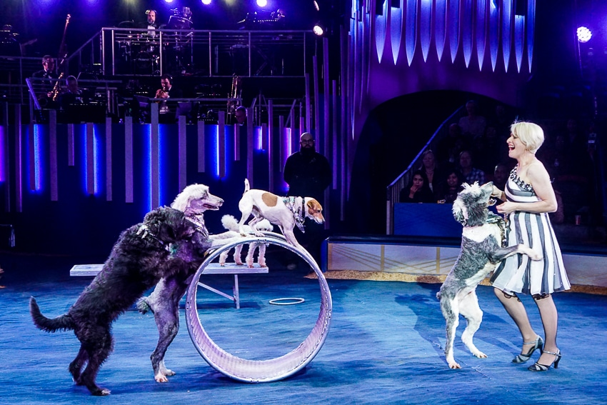 Rescue dogs at Big Apple Circus