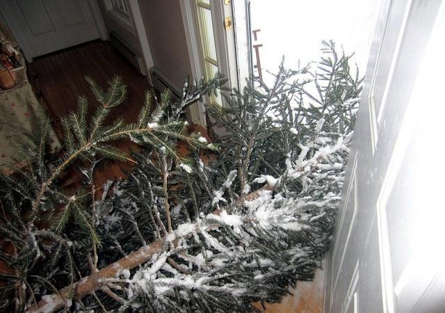 Weber Christmas Tree 2013