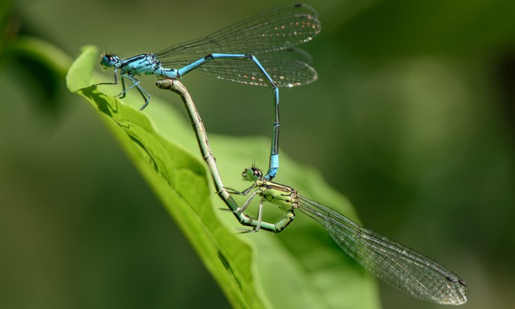Unbelievable Dragonhflies
