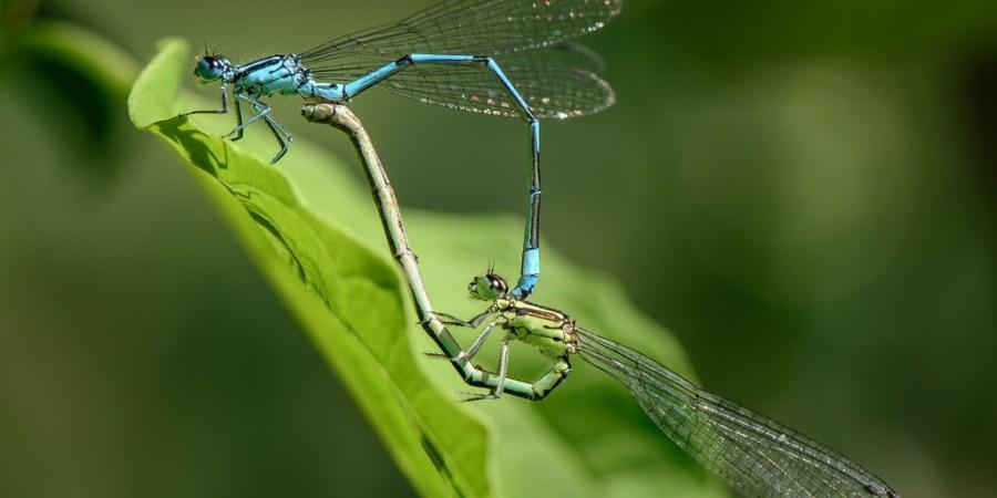 Unbelievable Dragonhflies