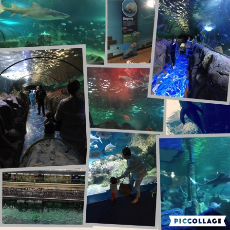 The Sealife Sydney Aquarium