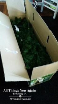 photo tree in box
