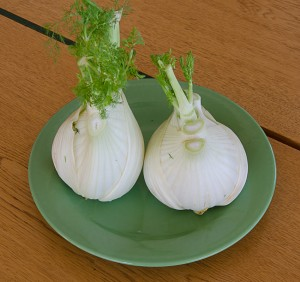 Fennel-side-by-side-300x282