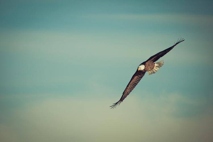 Short Inspiration story- soar life a eagle