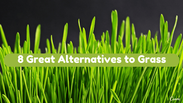 8 great lawn alternatives to grass  Alltop Viral