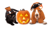 The Best Cats and Dogs Halloween Costumes(+Bonus for other ...