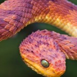 Top Ten Most Venomous/ Poisonous Snakes