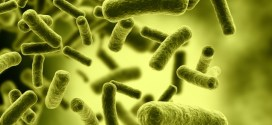 Top Ten Most Dangerous Bacteria on Earth
