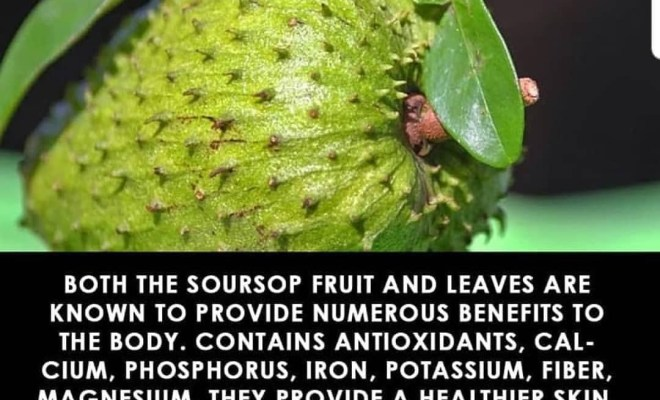 Important health benefits of Soursop