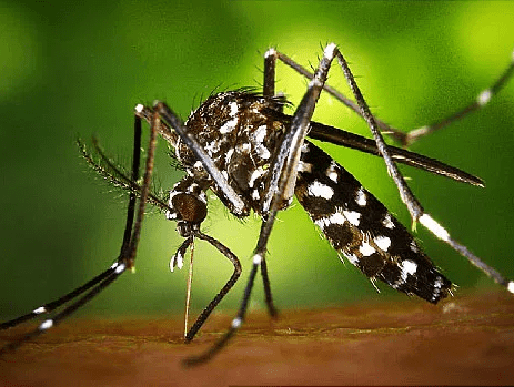 Test sterilisation of male mosquito