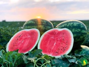 Watermelon can help you lose weight