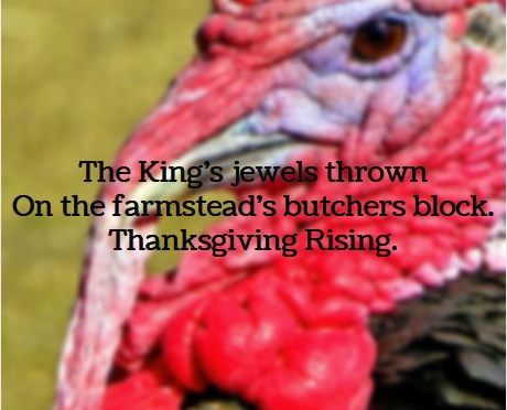 Turkey, a Thanksgiving Haiku, #thanksgiving #celebration via @PatFurstenberg