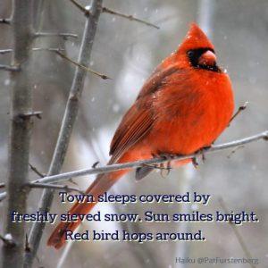 Happy, a Christmas Haiku. A joyous haiku about a red bird in winter.