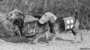 The dogs were also trained to carry first aid and supplies for soldiers at the front - Getty source