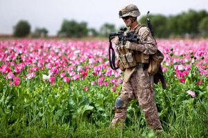 A soldier walking past a poppy field in Afghanistan