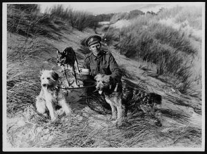 WW1 British messenger dogs and their handler