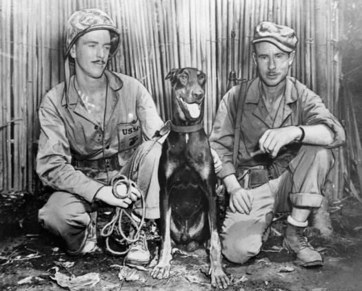 Cappy, one of the Devil Dogs of the Marine Corps, Source historydaily.