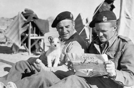 North Africa campaign - two British tank men and a dog who was certainly not sniffing bombs
