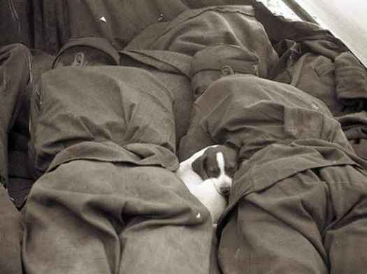 1945 - a puppy sleeping between two soldiers. Source: History Collection.