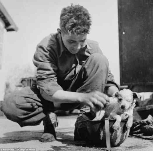 WW2 - Tunisia 1943, an American soldier using his helmet to wash a puppy. Source History Collection