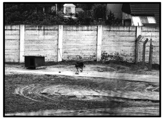 War Dogs History after WW2 to the Fall of Berlin Wall. A Wall Dog at the Berlin Wall