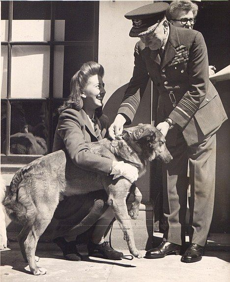 Bing, the Alsatian and Collie cross originally named Brian, was an army dog with the 13th Parachute Battalion, part of the 6th Airborne Division, parachuted over Normandy on D-Day on 6 June 1944 - source DailyMail