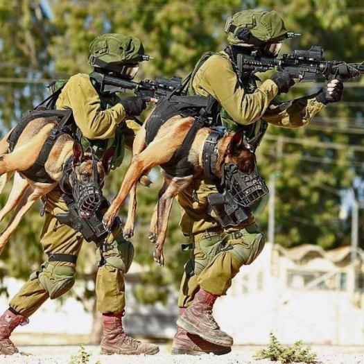 Israel - Fighters of Oketz Unit train with their four paw comrades  Source: Censor.net.ua