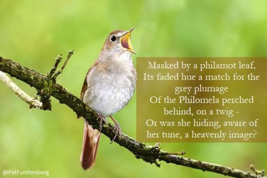 Philamot color, Philomela - Nightingale, in Autumn