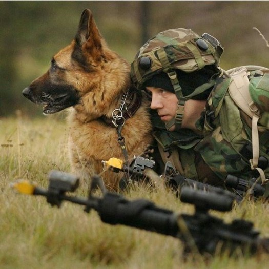 MWD and his handler keeping watch together