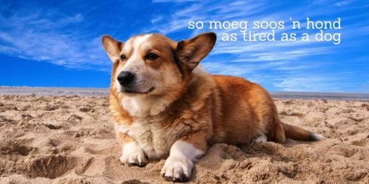 so moeg  soos 'n hond = as tired as a dog