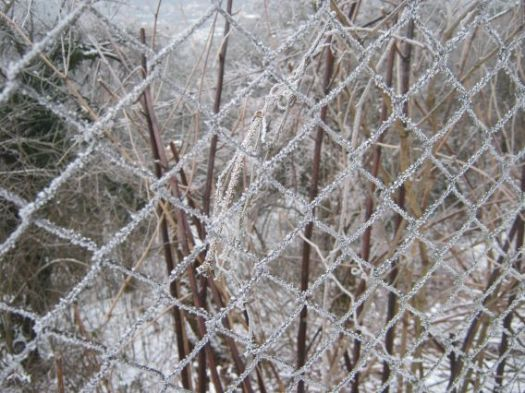 frozen chicken wire fence
