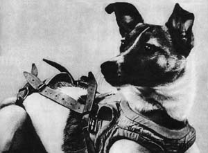Laika, 7 Dogs That Left their Paws on History