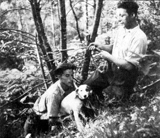 Robot, the dog who discovered the Lascaux Cave