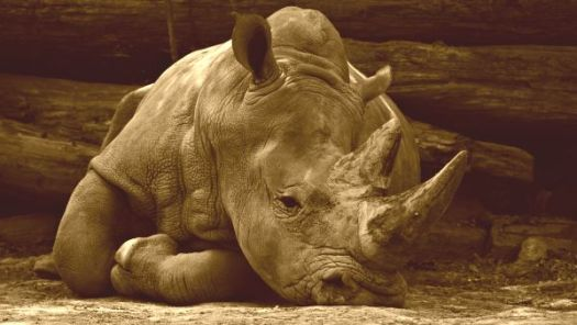Why Rhino is Grumpy and Hippo is mad at Hare, folktale part 2